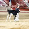 NYSpring18_Holstein-2725
