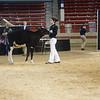 NYSpring18_Holstein-2731