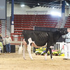 NYSpring18_Holstein-3567