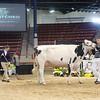 NYSpring18_Holstein-3712
