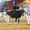 NYSpring18_Holstein-3570