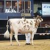 NYSpring18_Holstein-3573