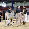 NYSpring18_BrownSwiss-1773