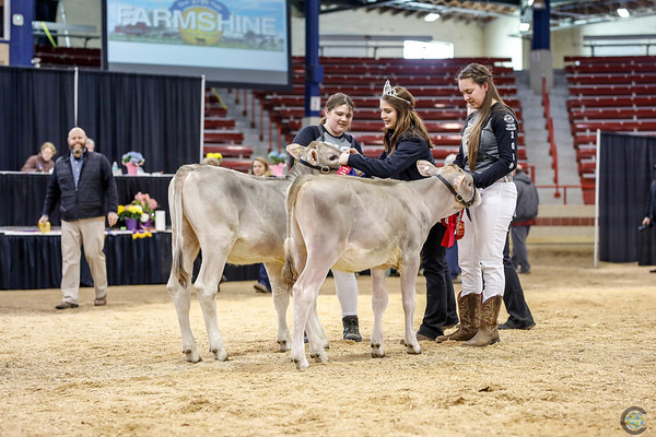 NYSpring18_BrownSwiss-1770