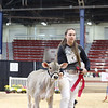 NYSpring18_BrownSwiss-1777