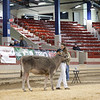 NYSpring18_BrownSwiss-1784