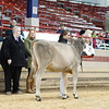 NYSpring18_BrownSwiss-1783