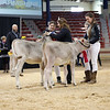 NYSpring18_BrownSwiss-1772