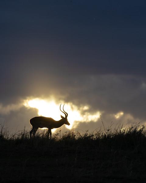 November - Masai Mara