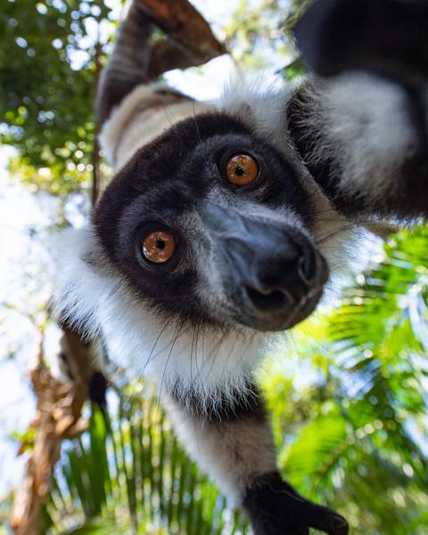 October - Madagascar