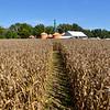 MET 093018 Pumpkin Corn Maze