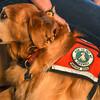 MET 101518 Service Dog Vest
