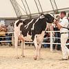 OntarioSummer2018_Holstein-0972