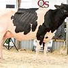 OntarioSummer2018_Holstein-0966