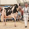 OntarioSummer2018_Holstein-0975