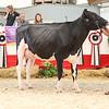 OntarioSummer2018_Holstein-0967