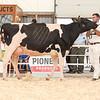 OntarioSummer2018_Holstein-0977