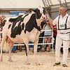OntarioSummer2018_Holstein-0974