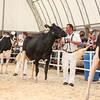 OntarioSummer2018_Holstein-0968