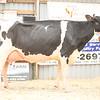 OntarioSummer2018_Holstein-1524