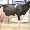 OntarioSummer2018_Holstein-1539