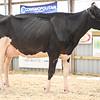 OntarioSummer2018_Holstein-1538