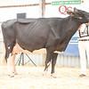 OntarioSummer2018_Holstein-1528
