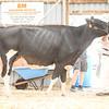 OntarioSummer2018_Holstein-1525