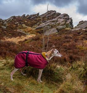 Peak District Day 3: Ramshaw Rocks