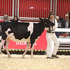 Royal18-Holstein-6809