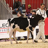 Royal18-Holstein-6806