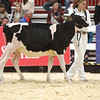 Royal18-Holstein-6805