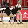Royal18-Holstein-6810