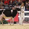 Royal18-Holstein-6811