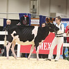Royal18-Holstein-6815