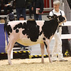 Royal18-Holstein-6804