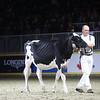Royal18-Holstein-9781