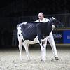 Royal18-Holstein-9779