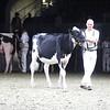 Royal18-Holstein-9776