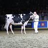 Royal18-Holstein-7433
