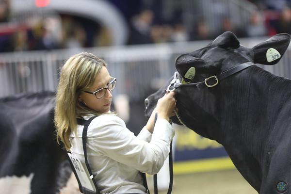 Royal18-Holstein-8298