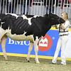 Royal18-Holstein-7509
