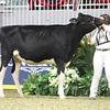 Royal18-Holstein-7511