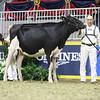 Royal18-Holstein-7505