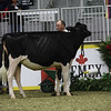 Royal18-Holstein-7502