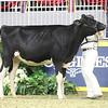 Royal18-Holstein-7513