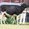 Royal18-Holstein-7508