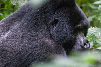 Rwanda Uganda Kenya 2018