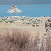 Tufa and deer at Mono Lake.