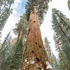 General Sherman.  Can you see the person taking a picture?